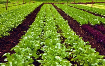 Agro commodities exporters, health products, organic farming India