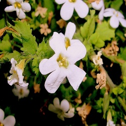 Organic Botanical Extract Archives -